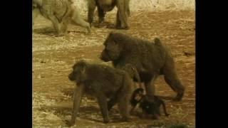 La Savana di Serengheti - Taccuino di Viaggio Doc by Film&Clips