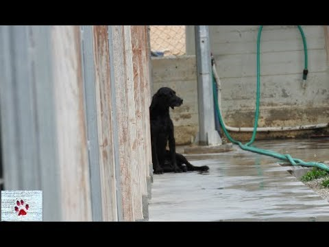 Death row for the Greek stray dogs -how things work here