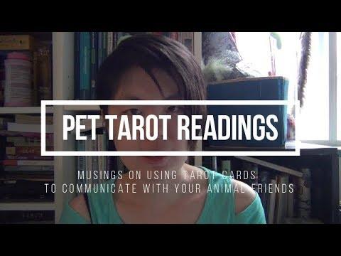 Cardslinging for Pets
