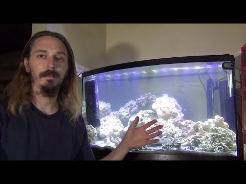 You NEED to KNOW this before getting a FISH TANK!