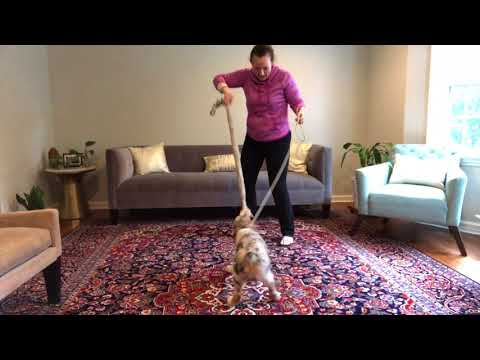 How to train a puppy to play tug safely (without biting)