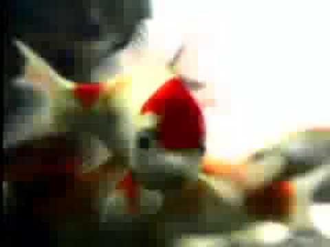 Spay and Neuter Cat Spot Video