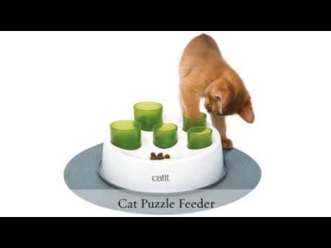 Pet Warehouse - How to Keep Your Indoor Cats Entertained