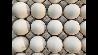 Delhi Murga Mandi Price   भाव पूरे भारत के अंडे और ब्रायलर के थोक भाव ! 17  3 2018 - PlayKindle org