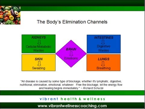 Understanding How the Body Eliminates Toxins