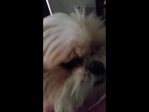 Puppy Show Season 2 Episode 2: Smelly Ear