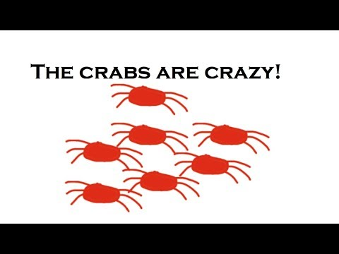 Christmas Island: The Crabs