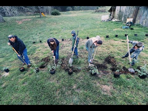Two families (14 people) unite to plant nearly 100 berries