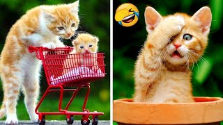 Funny Cats And Dogs That Will Make You Laugh 😂 - Funniest Animals Compilation #5