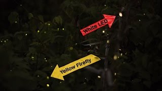 See How These Artists Got Fireflies To Flash On Command