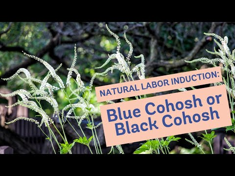 Natural Labor Induction Series: Blue Cohosh or Black Cohosh