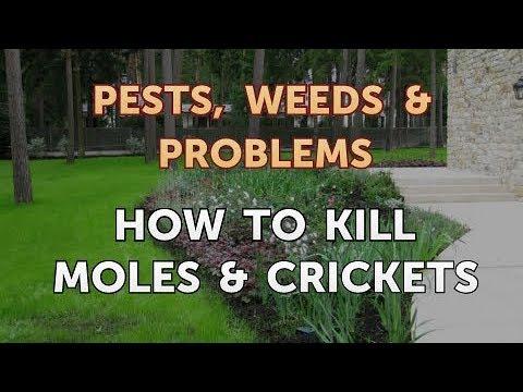 How to Kill Moles & Crickets