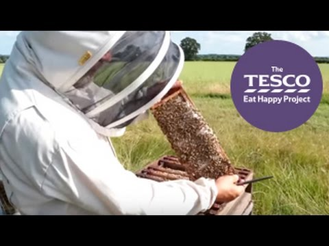 How do bees make honey for us to eat? Watch our Online Field Trip to find out