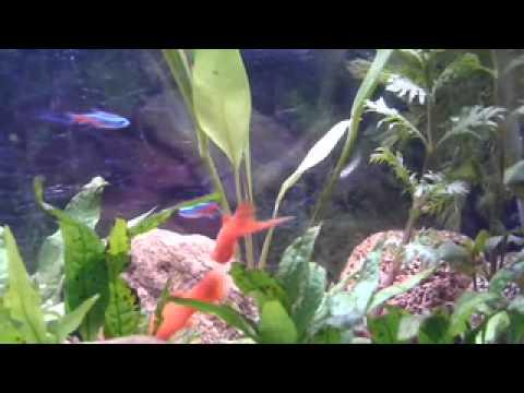 Clear Water-Healthy Fish in an Aquarium