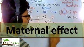 Maternal effect