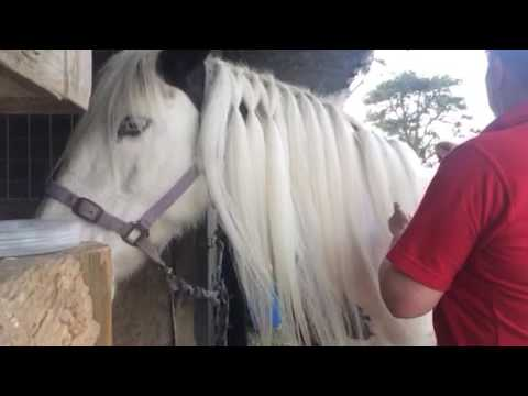 How to do a horses mane in a lattice
