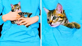 15 CUTE PET HACKS AND CRAFTS