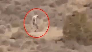 5 Mysterious Creatures Caught On Camera & Spotted In Real Life! #2