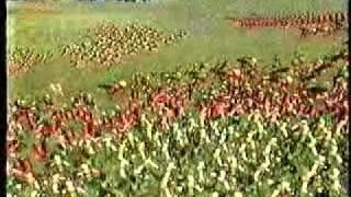 Time Commanders - Battle of Bibracte