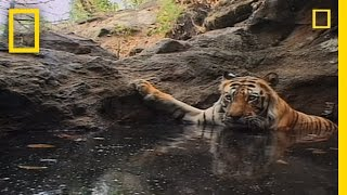 Tiger Eye: Up Close and Personal | National Geographic