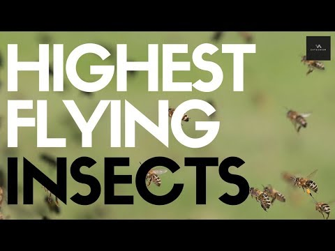 As High As Planes? Highest Flying Insects