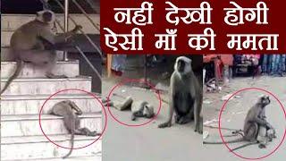 Bihar: Monkey की ममता देख आपका दिल पिघल जाएगा | वनइंडिया हिंदी