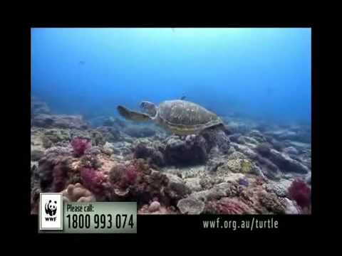 Adopt a Turtle Today - Help WWF protect marine turtles