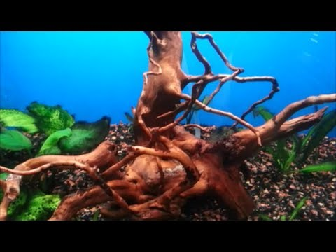 How to Prepare/Clean Driftwood for Aquarium Use