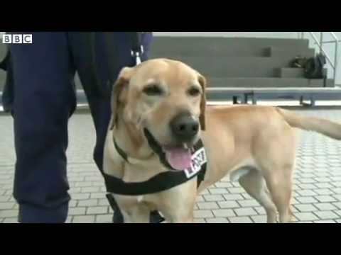 BBC News   New life in sniffer unit for Hong Kong;s stray dogs