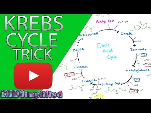 Krebs Cylcle Trick  How to remember krebs cycle FOREVER!!
