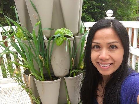 Greenstalk Garden Tower Update and What's Growing!