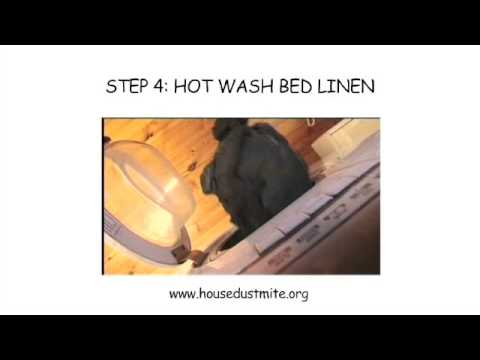 How to Keep a Bed Mite Free