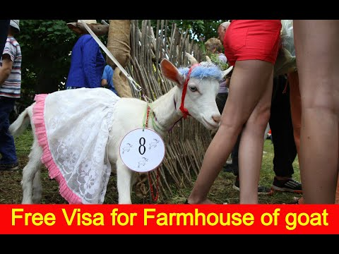 job in Dubai 286, Free Employment Visa for Farmhouse of goat