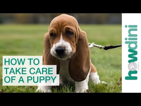 How to Take Care of a Puppy: Bringing a Puppy Home