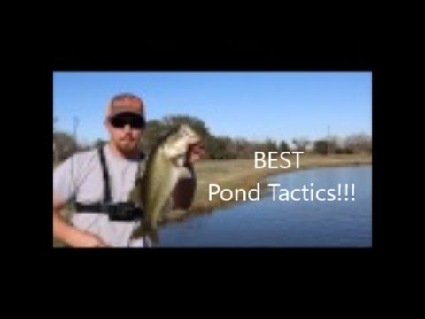 Spring Pond Fishing Tactics For BIG Bass!!