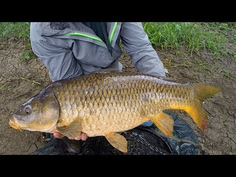 Carp Fishing in Rivers - How to Catch Carp in Rivers - River Fishing for Carp