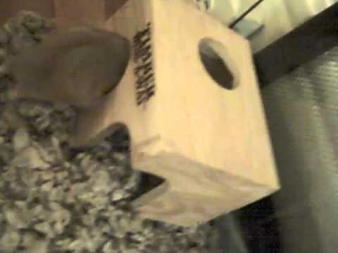 Cage Stain & Odor Remover for Hamsters