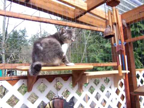 Cat Enclosure #1 Connected Directly From My House Through Cat Door