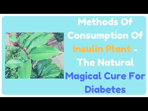 Methods Of Consumption Of Insulin Plant - The Natural Magical Cure For Diabetes