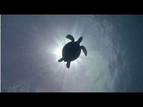 Protect the Night: Sea Turtles
