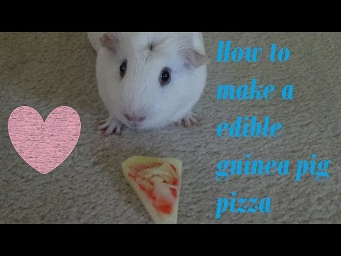 How to make edible guinea pig pizza (MUST WATCH)