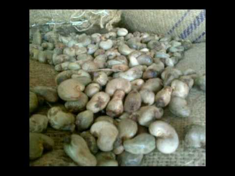 CASHEW NUTS AVAILABLE FOR EXPORT IN NIGERIA