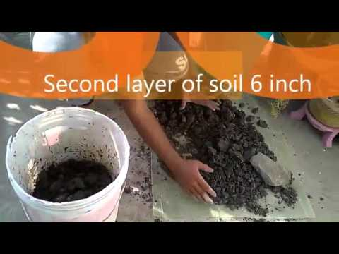 World soil day special to make soil soft