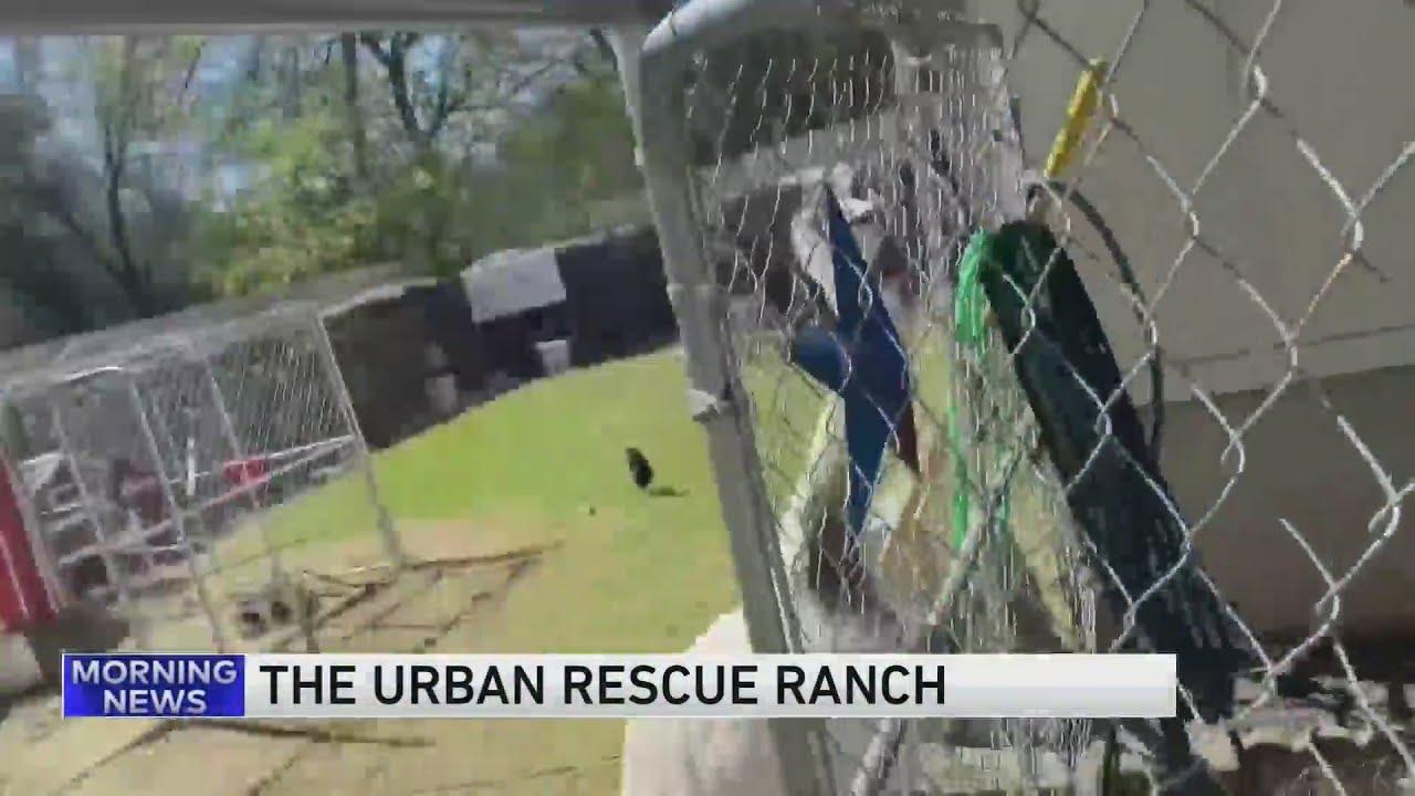Ben Christie, The Urban Rescue Ranch