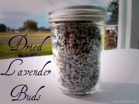 Saving Dried Lavender