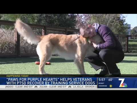 NBC 7 Features Paws for Purple Hearts