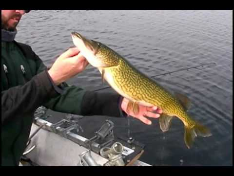 Ice Out Chain Pickerel