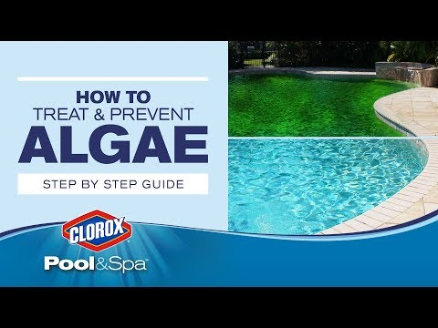 Treating and Preventing Green, Mustard and Black Algae in Pools:  Clorox® Pool&Spa™