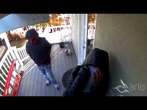 Caught on Arlo: Three Thieves