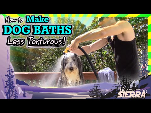 How to Make DOG BATHS Less Torturous!